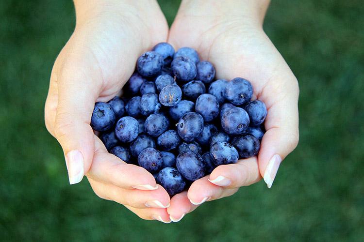 ImprendiNews – Agricoltura Famigliare, due mani femminili mostrano degli acini d'uva