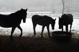 ImprendiNews – Cameloth, in inverno
