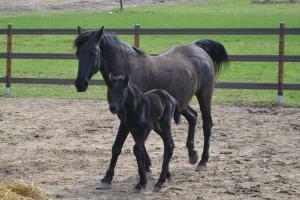 ImprendiNews – Equiparlando, Tina con la neonata Ayasha.