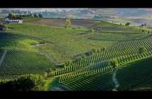 ImprendiNews – Unesco, vista di colline tipiche di Langhe, Roero e Monferrato