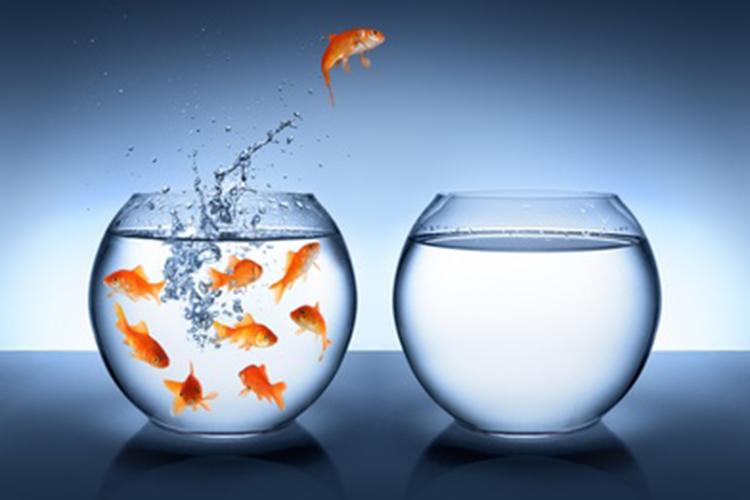 ImprendiNews – Libertà, un pesciolino rosso salta da una vasca d'acqua all'altra