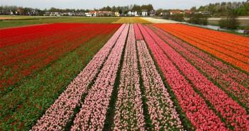 ImprendiNews – Benessere economico simboleggiato dai colori della natura
