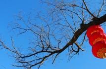 ImprendiNews – Cina, lampada cinese attaccata a un albero